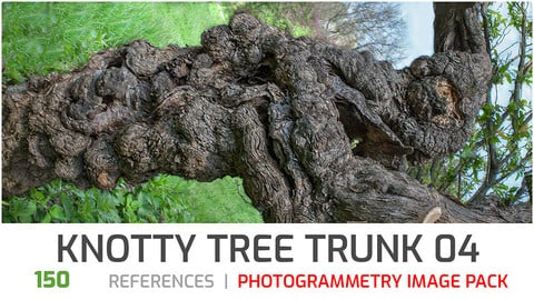 Knotty Tree Trunk #4 Photogrammetry image pack
