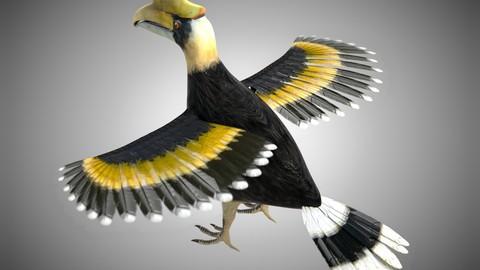 Horn bill Bird Rigged PBR