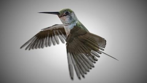 Humming Bird Rigged PBR