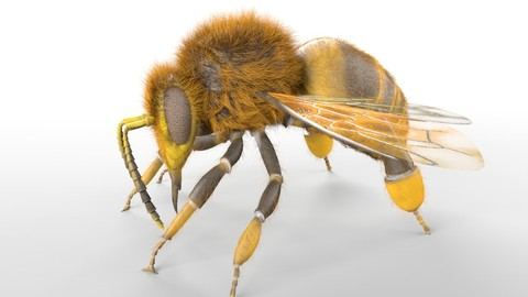 Honey Bee Insect Rigged PBR