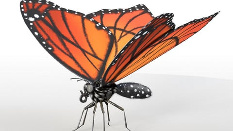 Butterfly Rigged PBR
