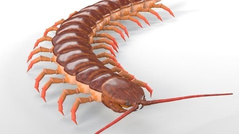 Centipede Insect Rigged PBR
