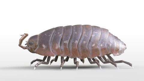 Pill bug Insect Rigged PBR