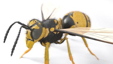Wasp Hornet Rigged PBR
