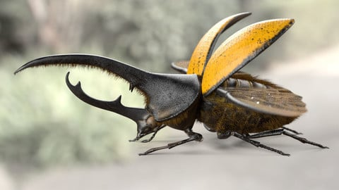 Hercules Beetle Insect Rigged PBR