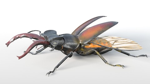 Stag Beetle Insect Rigged PBR