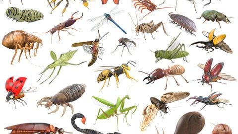 30 Insects Rigged PBR Low Poly Collection