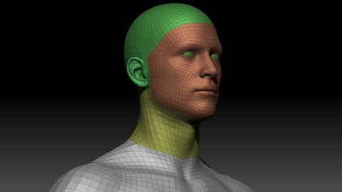 Body Parts BaseMeshes