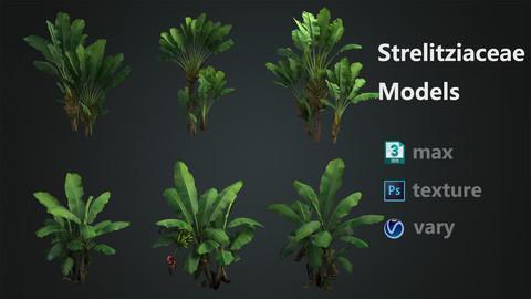 Strelitziaceae+Banana trees