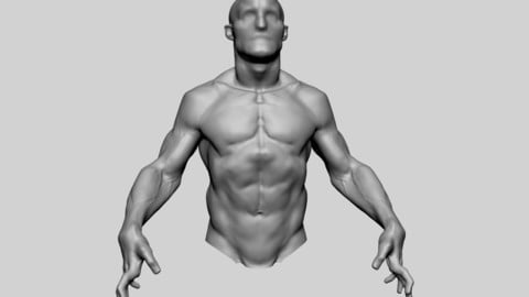 Upper Body Sculpting