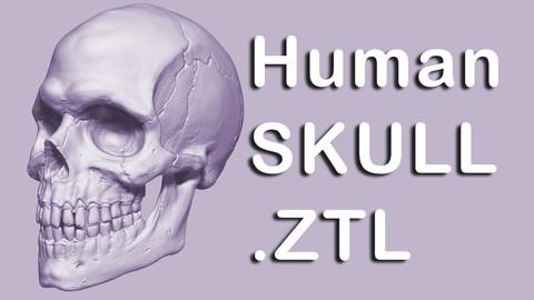 Skull-Detailed