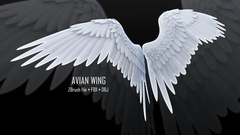 ZBrush Avian Wing + FBX + OBJ
