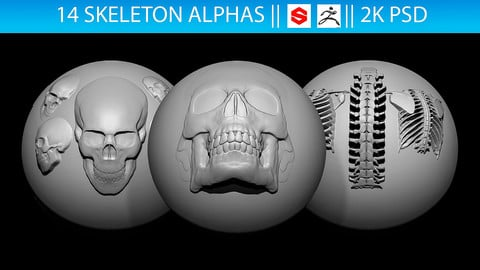 14 Skeleton Alphas Vol.2 (ZBrush, Substance, 2K)