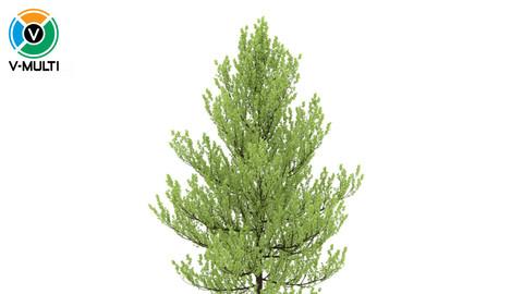 3D Model: Standard Tree