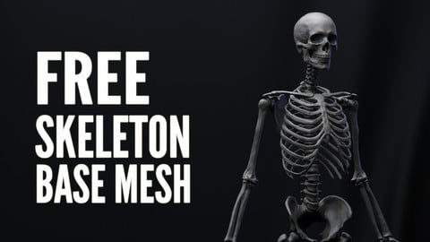Free Base mesh - Human Skeleton