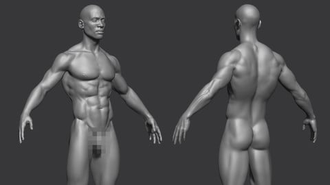 Male Anatomy Reference Model 2
