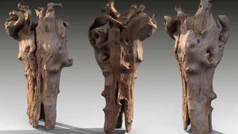 Twisted Tree Stump Scan