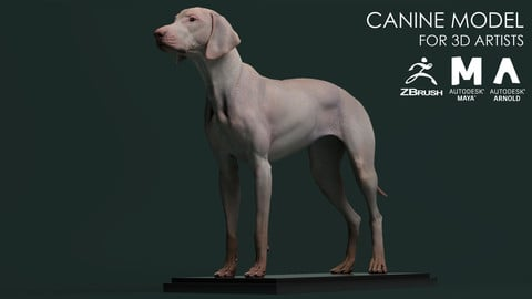 Canine Model