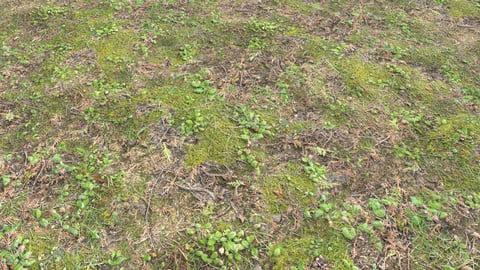 Forest ground PBR Pack 11 Textures