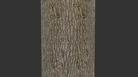 Trunk_wood_16K