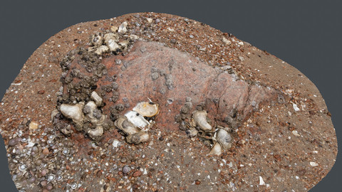 Photoscan_Beach Rock_0015_only HighPoly Mesh (16K Texture)