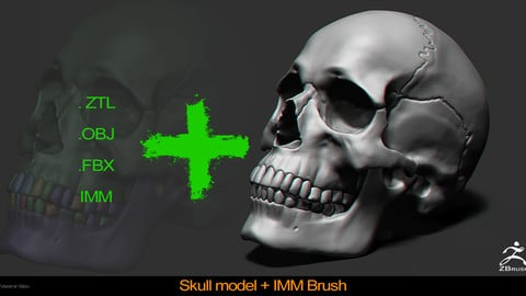 Skull Model IMM Brush