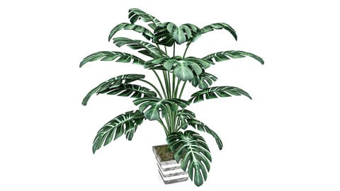 Monstera Leaves 3D Model