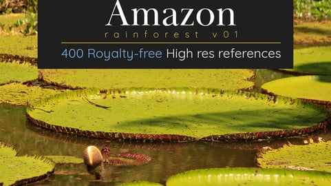 Amazon Rainforest V01: 400 Royalty free photos
