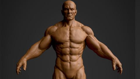Human Anatomy Basemesh