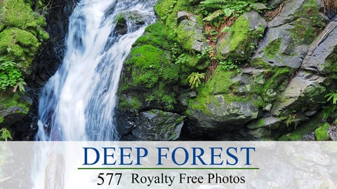 Deep Forest Photo Ref Pack