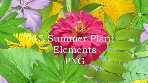 15 PNG summer plant elements