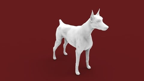 This is a dog