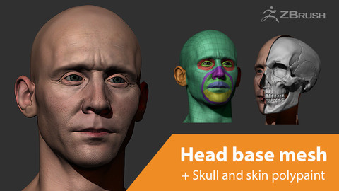 Male head base mesh