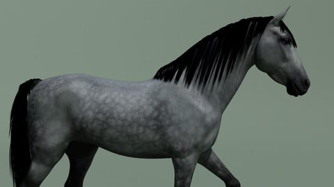 Horse animated + 10 colours