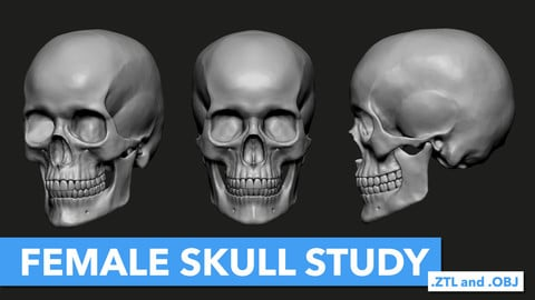 Female Skull Study (.ZTL and .OBJ Files)