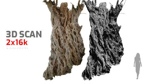 Ancient olive Tree #2 RAW 3D Scan 2x16k Textures