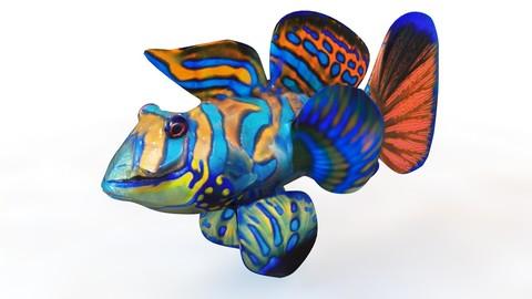 Mandarin Dragonet Goby 3D Model