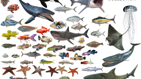 50 Fish Collection low poly 3d Models