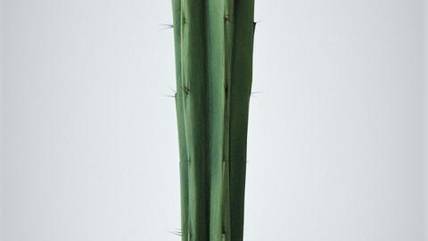 Cactus 3D-Model