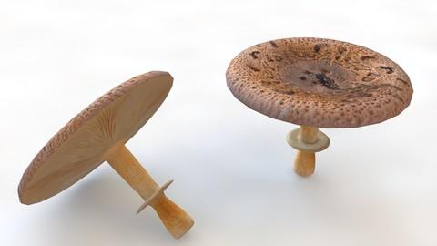Mushrooms brown wide top 3D Model
