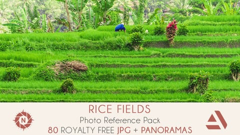 Photo Reference Pack: Rice Fields