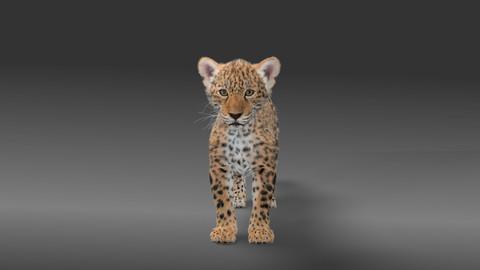 Panthera onca Baby Fur 3D model