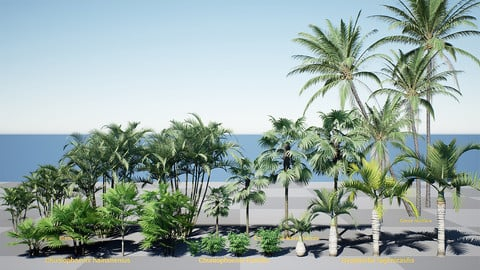 HQ Plants Volume 2 Palms for unreal engine 4 3D model set of 24