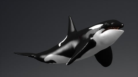 KillerWhale SCULPT PROJECT Painted