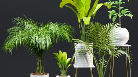 Plant and vase vol 2