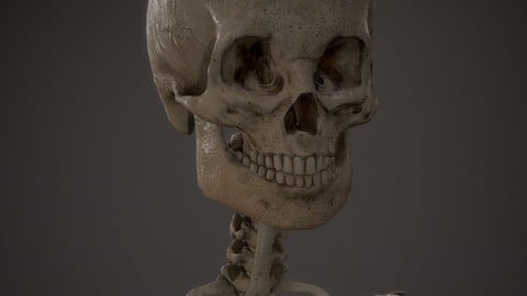 Skeleton kid/Adolescent 3d model lowpoly