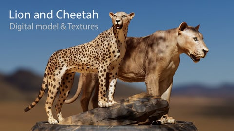 Lion and Cheetah assets - Digital Model and Textures
