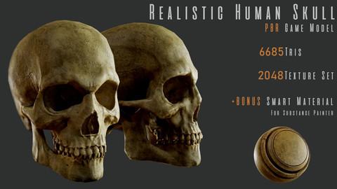 Realistic Human Skull - PBR Game Model + Smart Material