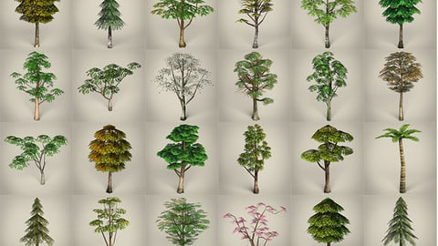 3D Game Ready Tree Collection