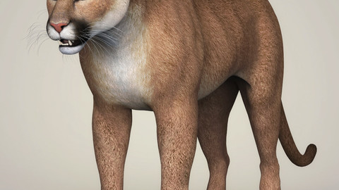 Photorealistic Wild Cougar